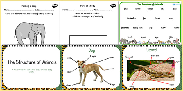 Structure Of Common Animals Resource Pack Animal Science