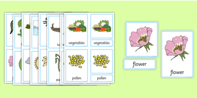 Plants and Growth Three Part Cards