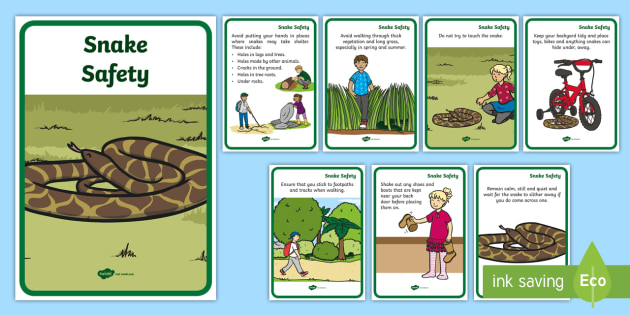 Snake Safety Large Information Poster - Australian Animals, reptiles, activity sheets, research, reading, writing, birds, fish, mammals, Aus