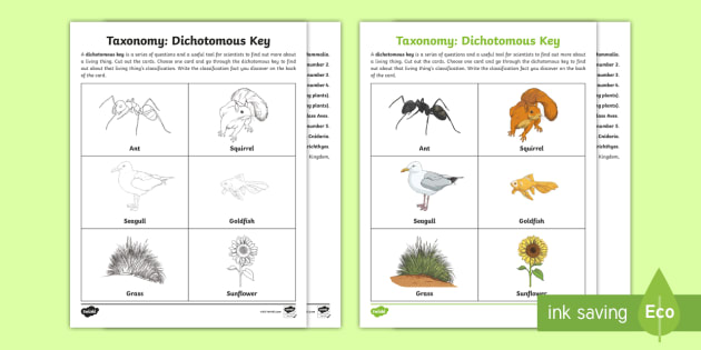 Dichotomous Key Worksheet Free | TUTORE.ORG - Master of ...