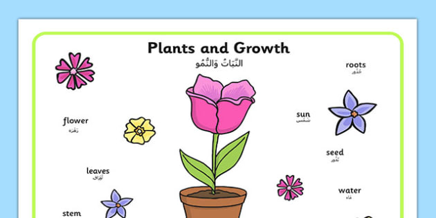 Plant Growth Word Mat Arabic Translation - arabic, Plant, Growth, Word Mat, Topic, Foundation stage, knowledge and understanding of the world, investigation, living things