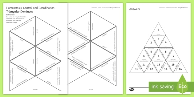 Homeostasis, Control and Coordination Tarsia Triangular Dominoes - Tarsia, homeostasis, control coordination, hormones, nervous system, endocrine system, thermoregulat, plenary activity