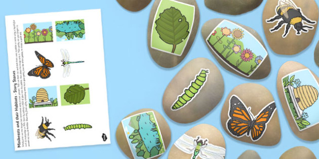 Minibeasts and Their Habitats Story Stone Image Cut Outs - story stone, cut outs