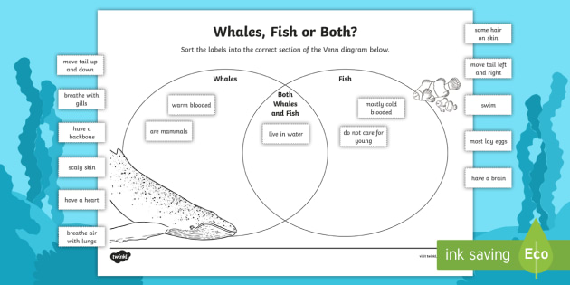 Whales and fish venn diagram worksheet activity sheet venn whales and fish venn diagram worksheet activity sheet venn diagram worksheet ccuart Images