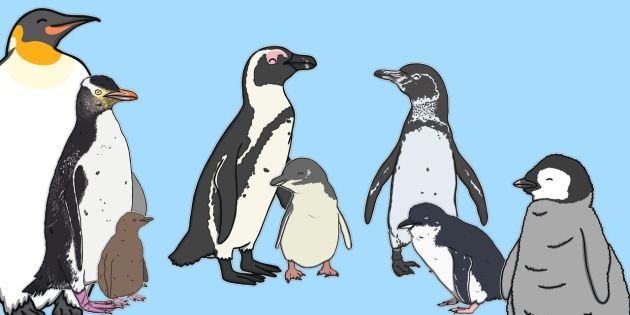 NEW Life Size Penguin Cut Outs