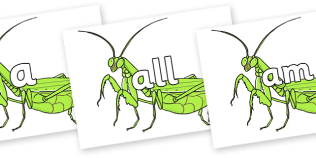 Foundation Stage 2 Keywords on Praying Mantis - FS2, CLL, keywords, Communication language and literacy,  Display, Key words, high frequency words, foundation stage literacy, DfES Letters and Sounds, Letters and Sounds, spelling