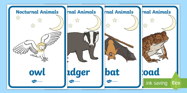 Nocturnal Animals Display Posters - animals, nocturnal, night