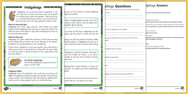 Hedgehogs Differentiated Reading Comprehension Activity