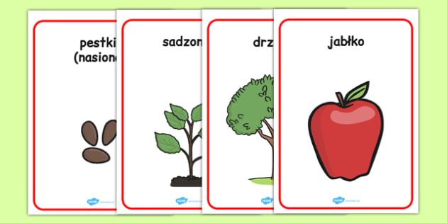 Plakaty Cykl życia Jabłoni po polsku - przyroda, drzewo