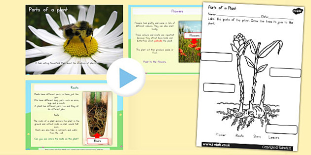 Parts of a Plant Task Setter Activity PowerPoint with Worksheet