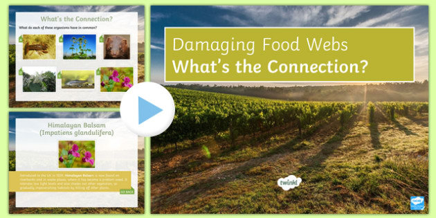 Damaging Food Webs What's the Connection?