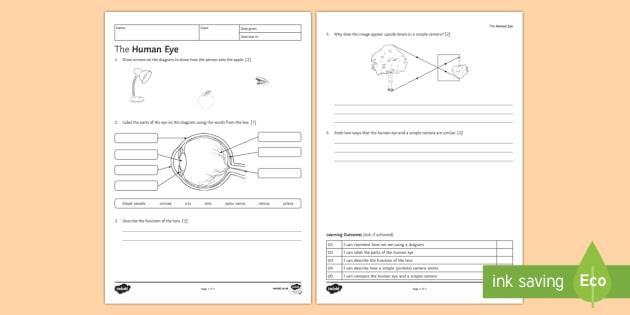 Ks3 The Human Eye Homework Worksheet    Activity Sheet