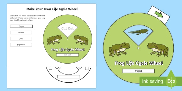 Make Your Own Life Cycle of a Frog Spin Wheel - life cycle, frog