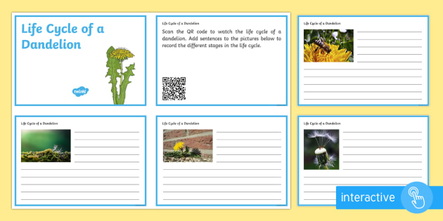 Life Cycle of a Dandelion Code Hunter - QR Codes, plant, life