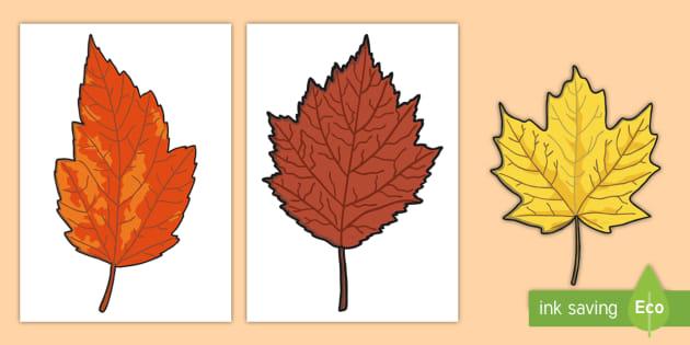 FREE! - Editable Autumn Leaves Templates - Display, editable