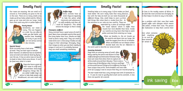 Sense of Smell Differentiated Fact File