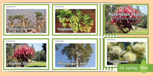 Australian Plants Matching Cards - Australian Plants, Plants, Environment, matching, Aboriginal, plants and animals, plant uses, native