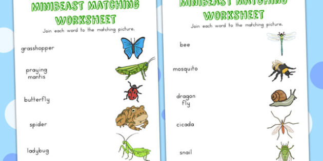 Minibeast Word and Picture Matching Worksheets - match, sort