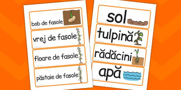 Ciclul de Viata la Fasole, cartonase, cuvinte, imagini, imprimabil, Romanian
