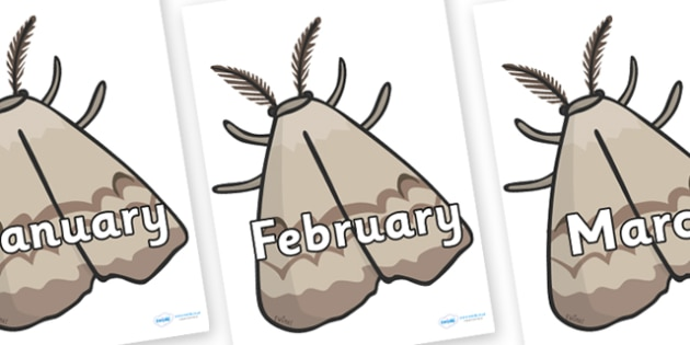 Months of the Year on Insects - Months of the Year, Months poster, Months display, display, poster, frieze, Months, month, January, February, March, April, May, June, July, August, September