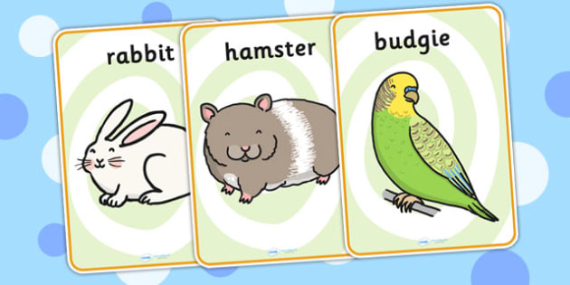 Pets Display Posters - Pet, display poster, A4, display, pets, cat, dog, rabbit, mouse, guinea pig, rat, hamster, gerbil, horse, puppy, kitten, snake, chinchilla, snail, lizard, budgie