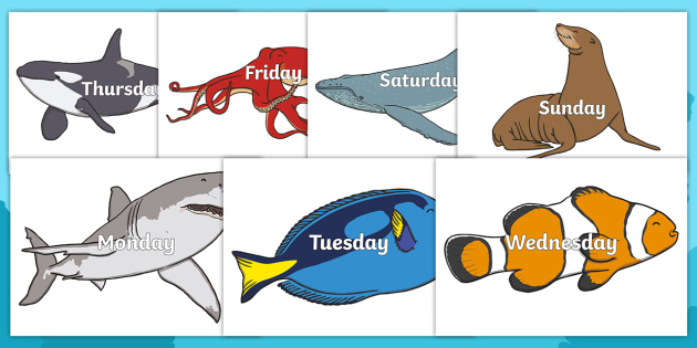 days of the week on sea creatures under the sea sea