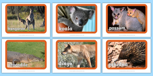 Australian Animal Display Photos - Australia, Australian, animal, photo, display photo, kangaroo, emu, koala, crocodile, wallabee, snake, dingo