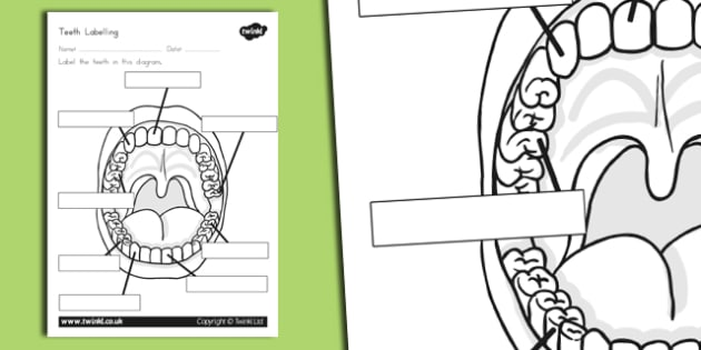 Teeth Labelling Worksheet - australia, teeth, labelling, worksheet