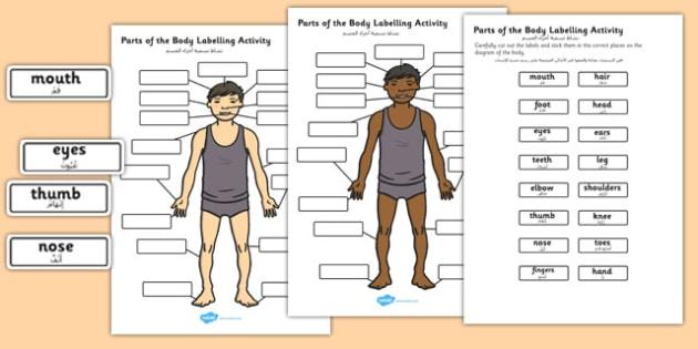 Body Parts Labelling Activity Arabic Translation - arabic, body, parts, labelling, activity