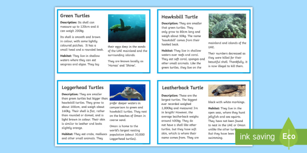 Turtle Fact Cards - turtle, arabian animals, sea, ocean, fact cards
