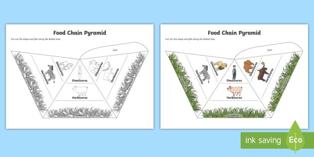 Food Chain Pyramids Foldable Visual Aids - food chain, pyramids