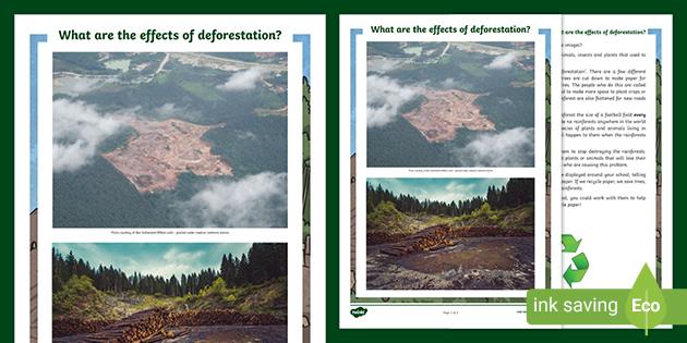 Argumentative essay about deforestation