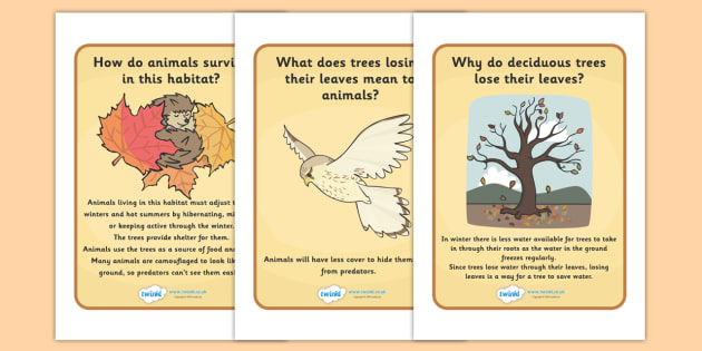 Deciduous Woodland Habitat Question and Answer Display Posters - Woods, animals, insects, British wildlife, woodland creatures, woodland animals, squirrel, hadgehog, badger, fox,
