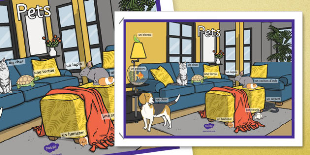 French Pets Display Poster - french, pets, display poster, display, poster