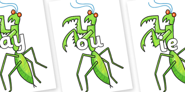 Phase 5 Phonemes on Praying Mantis to Support Teaching on The Bad Tempered Ladybird - Phonemes, phoneme, Phase 5, Phase five, Foundation, Literacy, Letters and Sounds, DfES, display