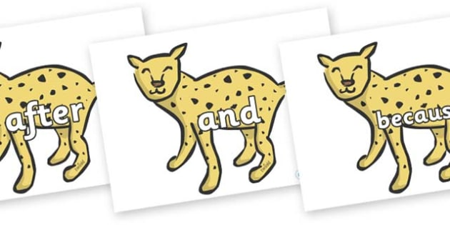 Connectives on Cheetahs - Connectives, VCOP, connective resources, connectives display words, connective displays