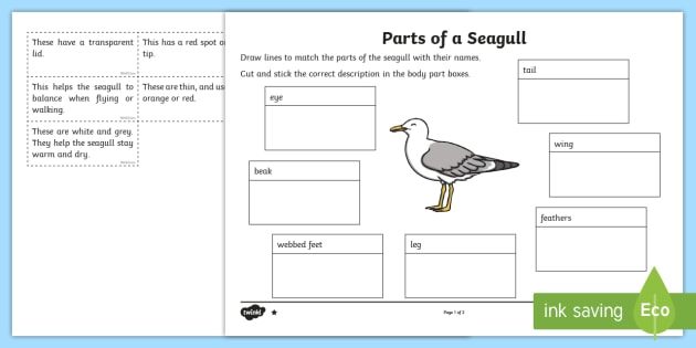 parts of a seagull differentiated worksheet activity sheet. Black Bedroom Furniture Sets. Home Design Ideas