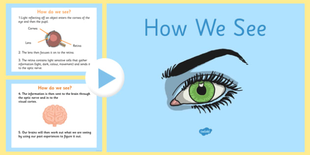 How we see powerpoint how we see how our eyes work how we ccuart Choice Image