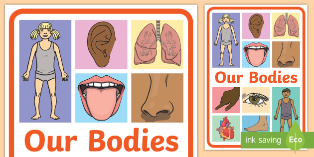 Our Bodies Display Poster - Our Bodies Display Poster - display banner, banner, our bodies, postre, poster, body, ourselves, par