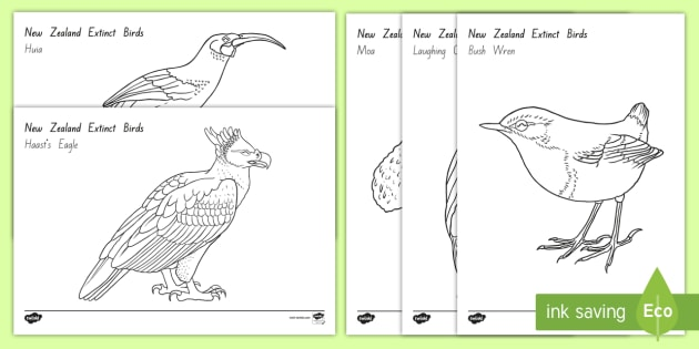 nz t 260 new zealand extinct birds colouring pages ver 1