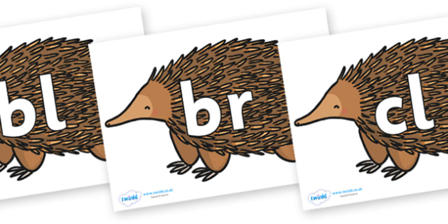 Initial Letter Blends on Echidna - Initial Letters, initial letter, letter blend, letter blends, consonant, consonants, digraph, trigraph, literacy, alphabet, letters, foundation stage literacy
