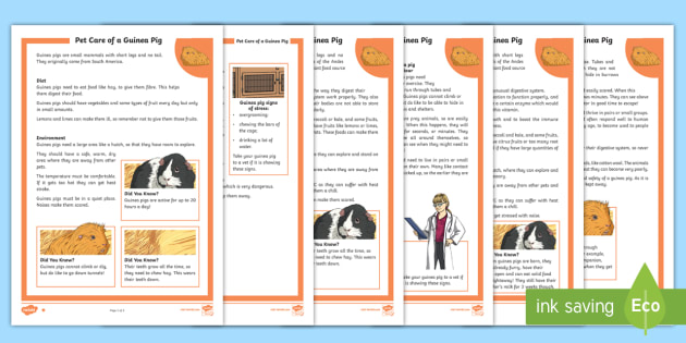higher ability ks2 pet care of a guinea pig differentiated