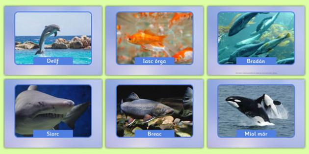 Irish Fish and Sea Creatures Display Photos Gaeilge - roi, irish, gaeilge, vocabulary, display photos, fish, sea creatures