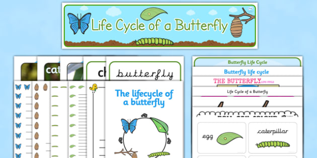 Butterfly Life Cyle Resource Pack - life cycles, minibeasts