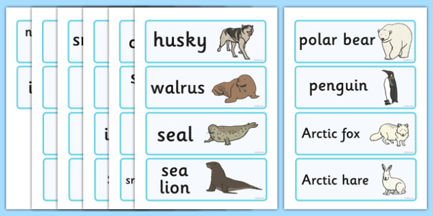 Polar Regions Word Cards - Polar Regions Word Cards, Polar Regions, polar region, region, polar, word cards, cards, flashcard, ice, North Pole, South Pole, Arctic, Antarctic, polar bear, penguin, glacier, iceberg, seal, husky, northern lights, igloo,