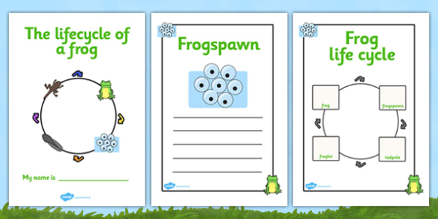 Frog Life Cycle Workbook (Minibeasts) - Frogspawn, Tadpole, Froglet, Frog, Minibeasts, Topic, Foundation stage, knowledge and understanding of the world, investigation, living things, snail, bee, ladybird, butterfly, spider, caterpillar
