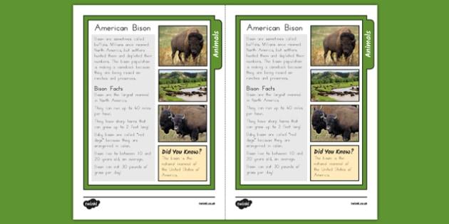 Bison Fact Sheet - usa, america, bison, fact sheet, facts, information