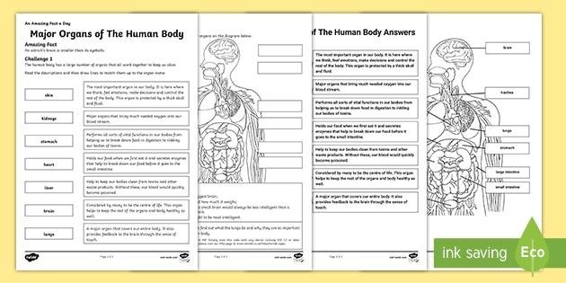 KS2 Main Organs of the Human Body Worksheet with AR