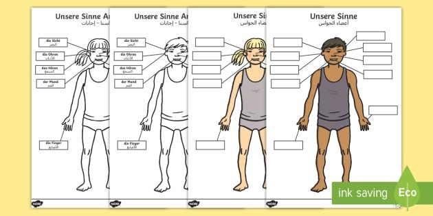 Deutsch Arabische Körperteile: Unsere Sinne Arbeitsblatt