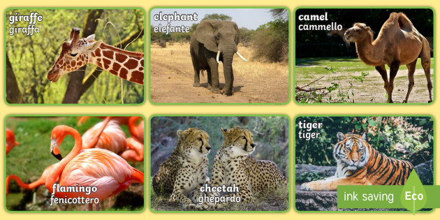 Italian English Animsld: * NEW * Zoo Animals Display Photos English/Italian
